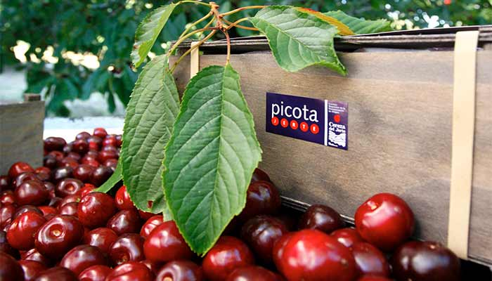 piccota-cherries-4